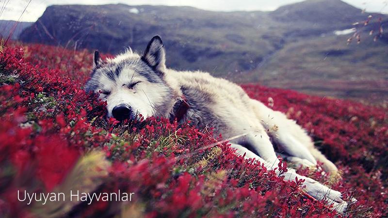 uyuyan-hayvanlar